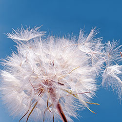 Pollenallergiker- was kann man tun?